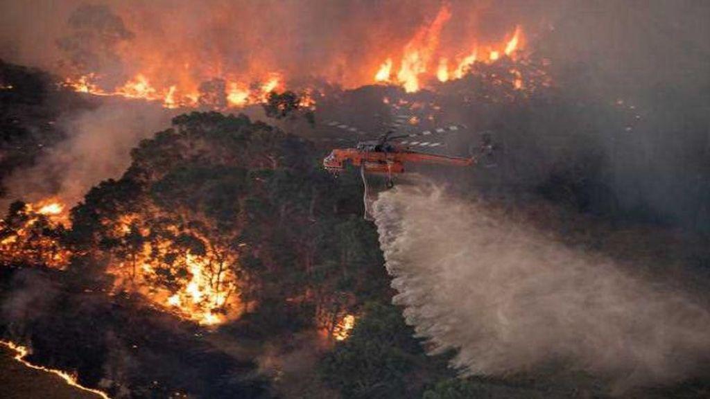 Blink-182 Jualan Kaus untuk Bantu Korban Kebakaran Hutan di Australia