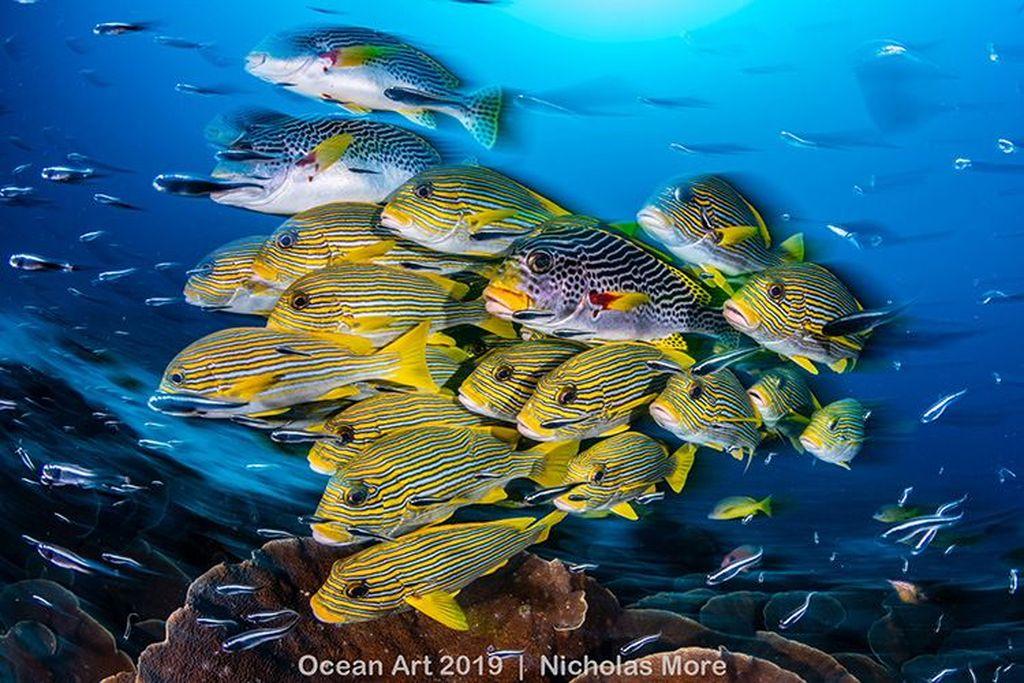 Blur of Sweetlips juara kategori Wide-Angle karya Nicholas More. Foto:Ocean Art 2019/Nicholas More