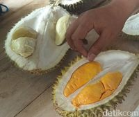 Durian Enak dari Candimulyo Ini Wajib Dicicipi Pencinta Durian