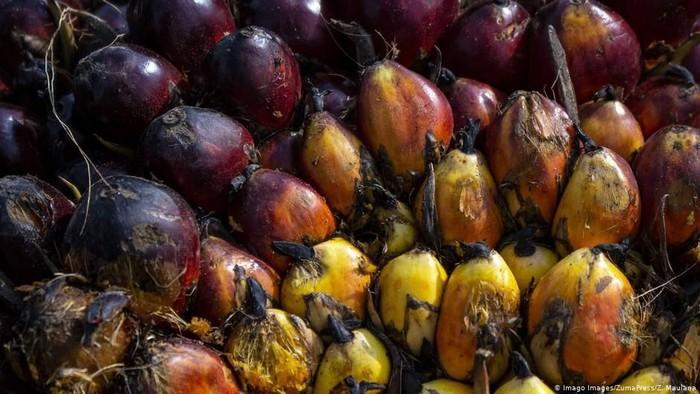 India Boikot Minyak Sawit Malaysia Indonesia Berpeluang Diuntungkan
