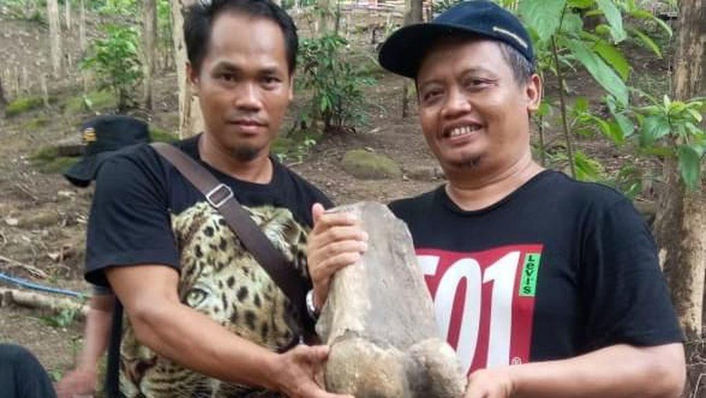 Niat Bikin Akik, Warga Indramayu Ternyata Bawa Fosil Gajah Purba