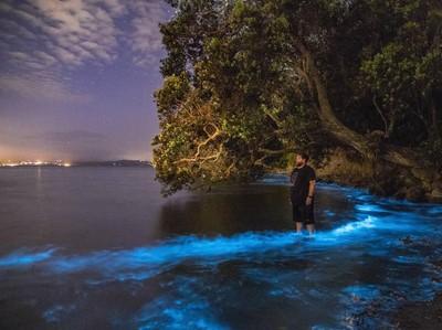 7 Fakta Fenomena Laut Bercahaya di Pantai Selatan Yogya