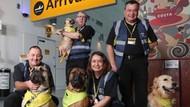 Ada Anjing Bandara yang Tugasnya Bikin Penumpang Lebih Santuy