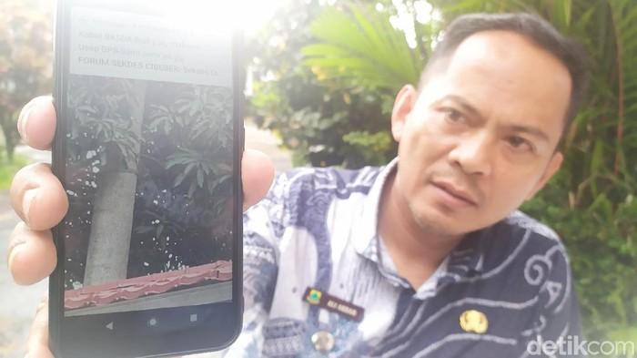 Camat Cibeber, Ali Akbar menunjukan video Surili yang berkeliaran di pepohonan. (Foto: Ismet Selamet/detikcom)