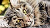 15 Gambar Kucing Super Realistis yang Bikin Pangling