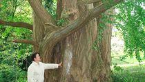 Pohon Ajaib Ini Bisa Hidup Ribuan Tahun, Apa Rahasianya?