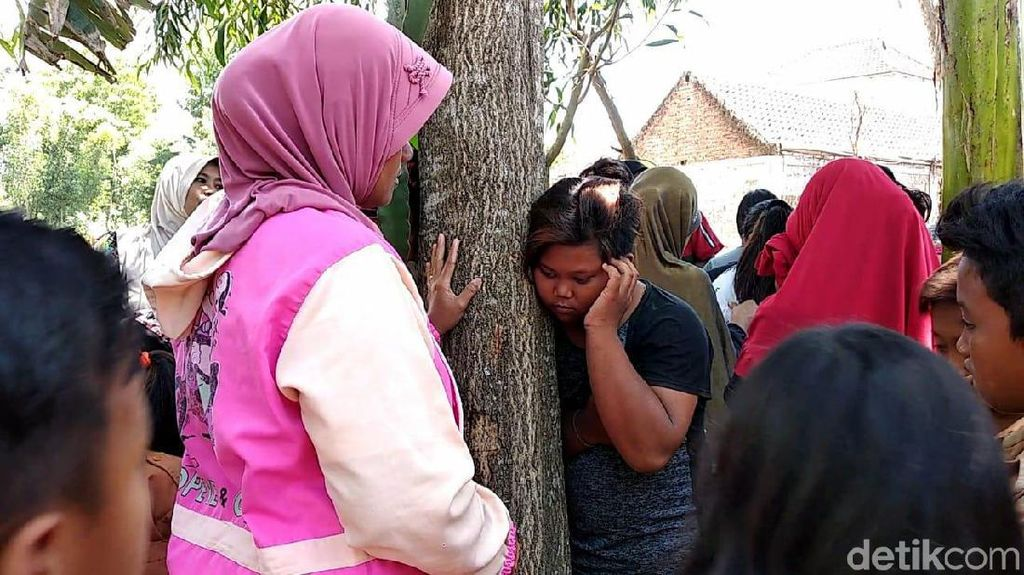 Warga Tak Keberatan Pohon Menangis di Jember Ditebang, Asal ...