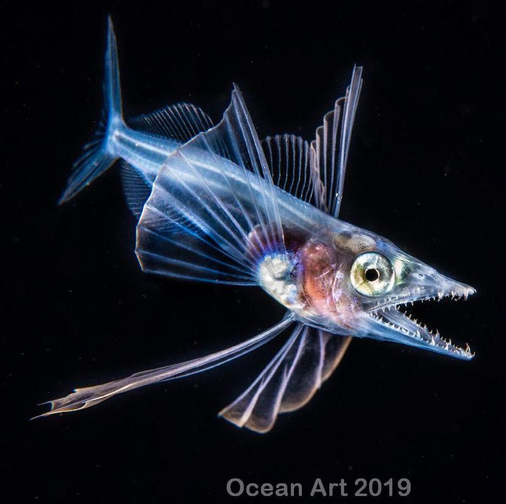 Karya Mencengangkan Jawara Kontes Foto Underwater