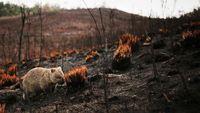 Panas Bumi Meningkat, Ini Bahayanya Buat Kita