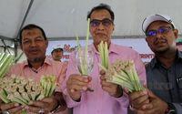 Pakai Sedotan Ramah Lingkungan, Kelantan Pilih Sedotan Serai!
