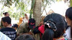 Pakar Pertanian Unej akan Teliti Pohon Menangis yang Gegerkan Jember