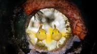 Cantik! Foto Terbaik Ocean Art yang Tampilkan Ikan dan Gurita