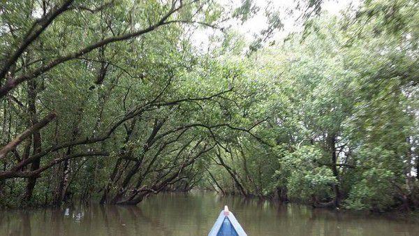 Taman Hutan Mangrove Tarakan