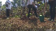 Sumedang Siapkan Sejuta Pohon Hijaukan Kawasan Tandus