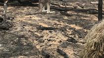 Berita Dunia: Kebakaran Hutan Mengubah Wajah Australia