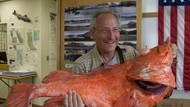 Berusia Sampai 200 Tahun, Ini 5 Ikan Tertua di Dunia