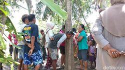 Jika Meresahkan, Pohon Keluarkan Suara Perempuan Menangis Akan Ditebang