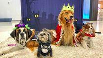 Foto: Gemas! Hewan-hewan Terapi di Bandara