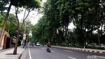 Potret Jalanan Kota Surabaya yang Asri dan Rimbun