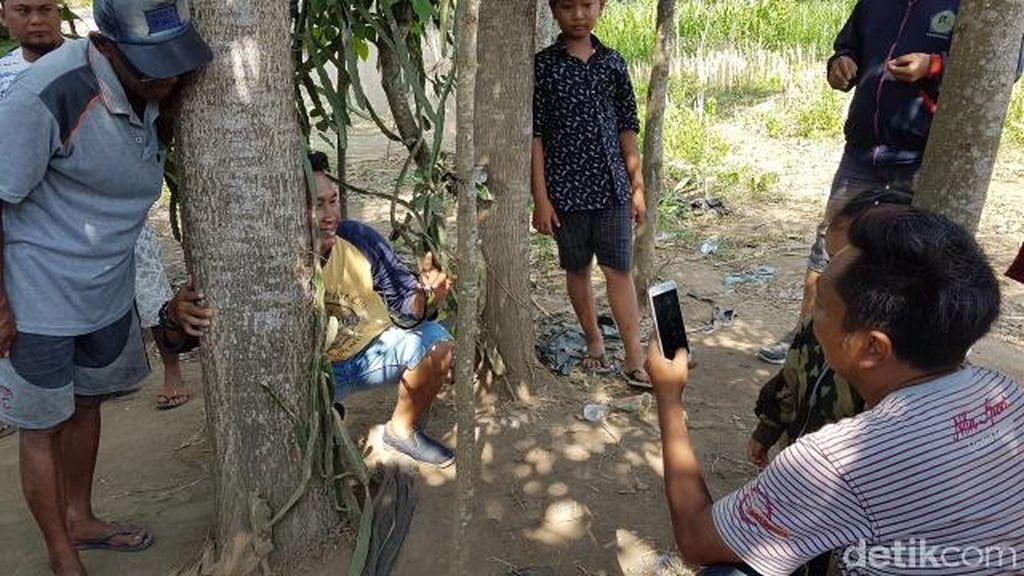 Pohon Menangis di Jember Ramai Didatangi Warga, Polisi Sempat Cek Lokasi