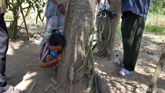 Pohon menangis di Jember (Foto: Yakub Mulyono/detikcom)