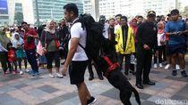 Aksi Anjing Pelacak Pamer Kemampuan Deteksi Bom di CFD
