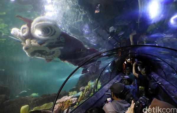 Atraksi barongsai tersebut langsung menjadi sasaran foto para pengunjung di Sea World, Ancol (Pradita/detikcom)