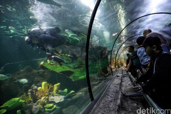 Tak perlu khawatir kelewatan menyaksikan atraksi barongsai di Sea World ini. Pasalnya atraksi tersebut akan berlangsung hingga 9 Februari mendatang (Pradita/detikcom)