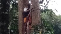 Digigit Semut Saat Tebang Kayu, Warga Aceh Meninggal