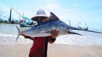 Nyawa Bocah Hampir Melayang Leher Tertancap Ikan Marlin Berpedang