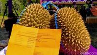 Di Pekalongan Ada Durian Nenek Moyang dari Pohon Usia Ratusan Tahun
