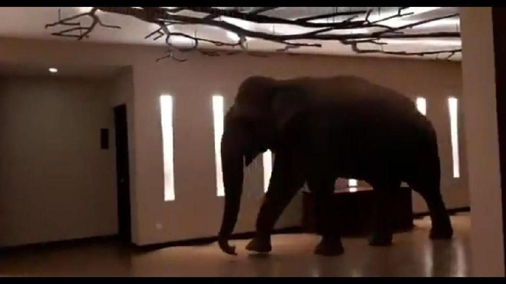 Ada Gajah Jalan-jalan di Lobi Hotel, Mau Ngapain?