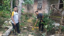 Warga Trenggalek Tewas Saat Potong Pohon Kelapa