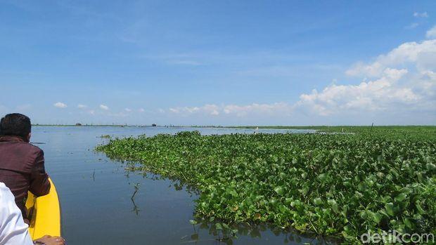 Danau Tempe di Kabupaten Wajo, Sulsel, Januari 2020 (Noval Dhwinuari Antony/detikcom)