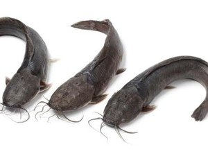 Kocaknya Kakak-Adik yang Ribut Gara-gara Ikan Lele