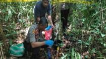 Jasad Perempuan Ditemukan Membusuk di Kebun Karet Pulau Bangka