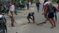 Bikin Heran! Kucing Nempel di Pundak Warga Saat Tangkap Ular 3 Meter di Medan