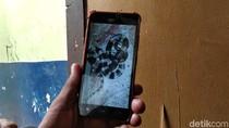 Jabar Hari Ini: Bocah Bandung Tewas Dipatuk Ular-Teror Monyet di Kuningan