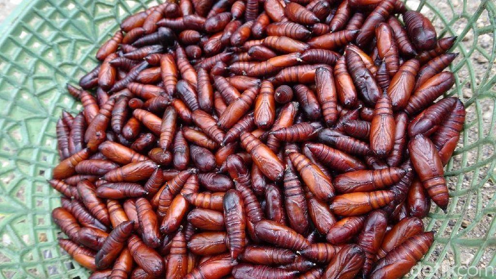 Gurih Banget! Ungker, Makanan Ekstrem dari Blora yang Diburu Orang