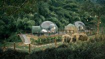 Potret Penginapan bareng Gajah