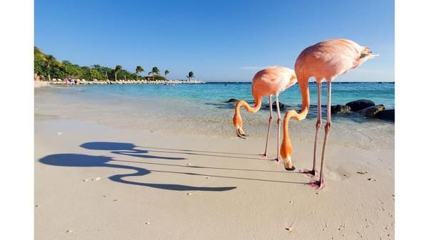 Potret flamingo berkumpul di Pantai di Aruba. Pemenang kategori foto yang diambil melalui smartphone atau tabletini diberikan kepada fotografer AS, Benjamin Shaul (Foto: TPOTY/CNN)