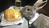 Disebut Crazy Rich, Kelinci Imut Ini Pamer Gaya Makan Mewah di Pesawat