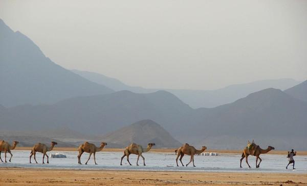 Djibouti, negara Afrika yang memiliki formasi gunung api, semak belukar yang luas dan pantai Teluk Aden. Negara ini adalah rumah bagi salah satu perairan paling asin di dunia, Danau Assal. (iStock)