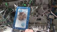 Astronot Berhasil Bikin Biskuit Cokelat di Luar Angkasa