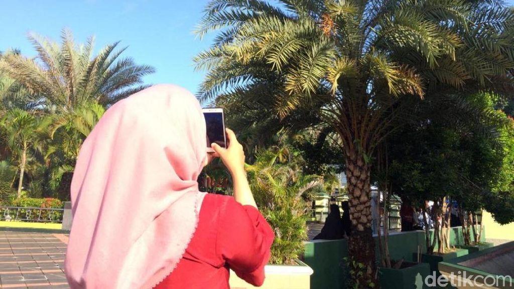 Pohon Kurma di Masjid Agung Ciamis Berbuah, Diminati Warga untuk Obat
