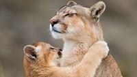 Gemas, Fotografer Ini Abadikan Momen Kasih Sayang Para Hewan