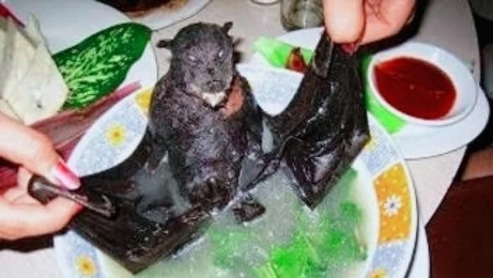 sup kelelawar