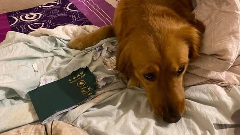 Anjing robek paspor