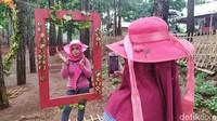 Foto: Hutan Pinus Instagramable dari Cianjur