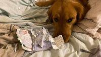 Saat Anjing Batalkan Liburan Keluarga ke Wuhan